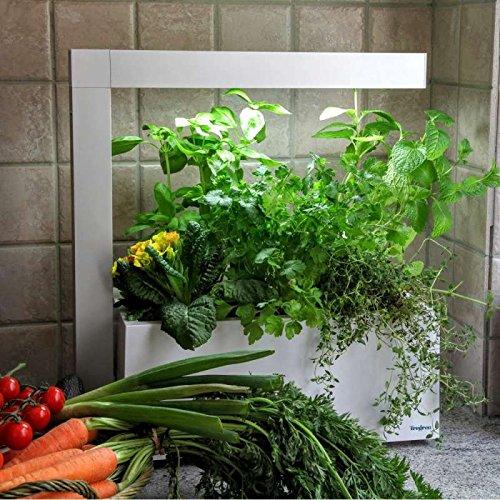 comparatif meilleur potager d'intérieur jardin d'intérieur aromatique